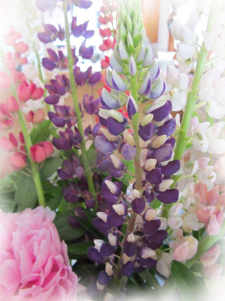 Les fleurs locales de saison sont de retour!