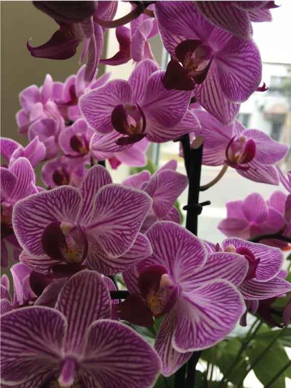 Comment entretenir votre plant d'orchidée
