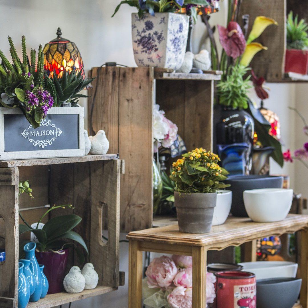 autres plantes et accessoires