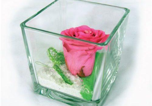 rose-eternelle-rose-cube